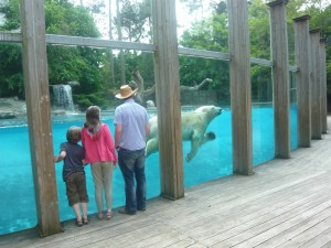 Picture at La Fleche Zoo of polar bear